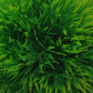 Plant 061  Пластиковое растение Шар Ф12см
