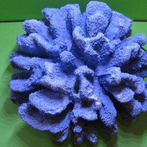 Laguna Коралл искусственный 710KA «Пектиния»