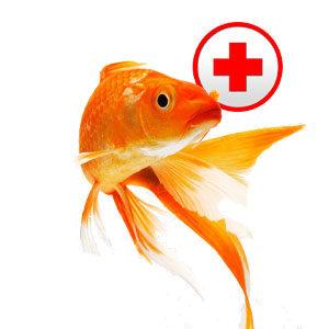 Профилактика и лечение заболеваний рыб